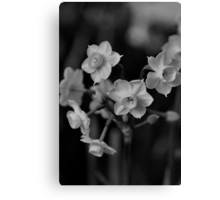 Jonquil - Family Ties Canvas Print