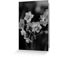 Jonquil - Family Ties Greeting Card