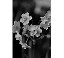 Jonquil - Family Ties Photographic Print