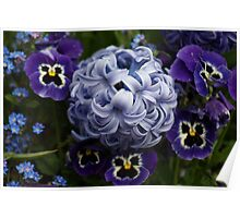 Hyacinths and Pansies Poster
