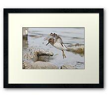 Birdie MATRIX Framed Print