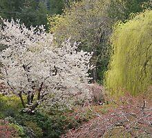 Spring garden, Victoria, BC  by Brian Middleton