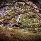 Audubon Park Bridge by RayDevlin