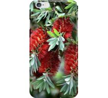 Bunch Of Aussies iPhone Case/Skin