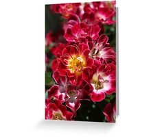 The Beauty Of Carpet Roses  Greeting Card