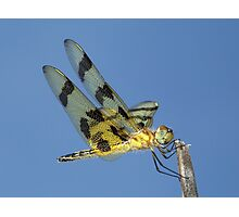 Beautiful Halloween Pennant dragonfly against the blue sky. Photographic Print