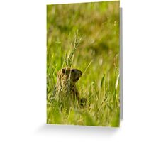 Groundhog in Field Greeting Card