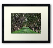 Trees - Country Victoria - Healesville Framed Print