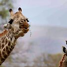 SHAPY AND PATTY- YEAH, Thats us for shapes and patterns! by Magriet Meintjes