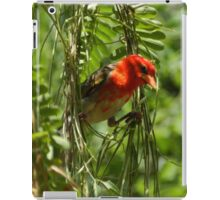 Red-headed Weaver, South Africa iPad Case/Skin