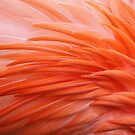 Flamingo Feathers by Anne McKinnell