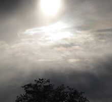 Gray Light by Carin Fausett