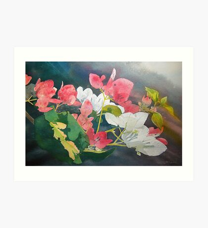 Bougainvillea-- flowers from Bangalore Art Print