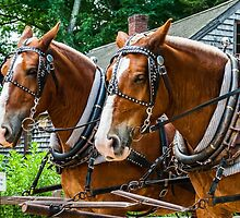 Belgian Draft Horses by Rebecca Bryson