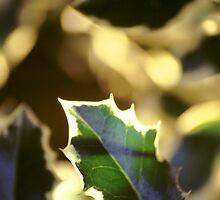 Holly Leaf by Bloomin' Arty Fashion