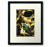 Holly Leaf Framed Print