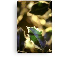 Holly Leaf Canvas Print