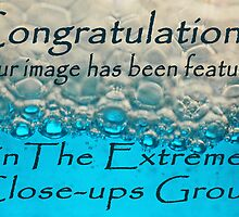 entry for extreme close-up banner challenge by Robin Nellist