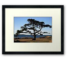 Tree Sculpture - Georgetown Tasmania Framed Print