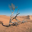Eking out life in the desert by Peter Doré