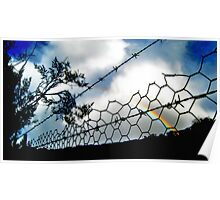 Barbwire Rainbow Poster
