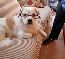 Toby caught wearing my glasses by joycee