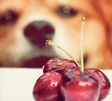 Cherry thief by Sangeeta