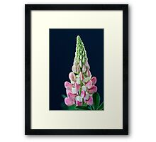 Lupin on Black Framed Print