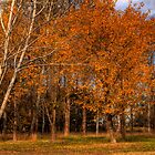 Autumn in Canberra Australia by Anna Calvert