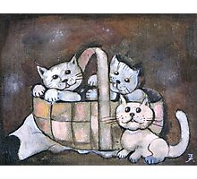 Kittens in a basket Photographic Print