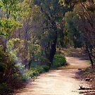 Path to Serenity by Rhonda F.  Taylor