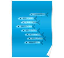 Barracuda's vector illustration Poster