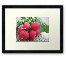 Radish Red Framed Print