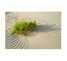 Desert Shrub Art Print