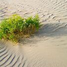 Desert Shrub by Peter Doré