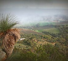 Foggy Morning on Mt Barker Summit by Barb Leopold