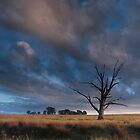 The Lone Tree - Badgery's Creek NSW by Malcolm Katon