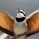 I want to fly away by ZeeZeeshots
