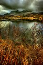 Sligachan Grasses by Karl Williams