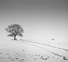 Winter Tree by Gert Doerfler