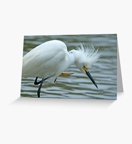 Snowy Egret at Avery Island Greeting Card