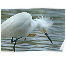 Snowy Egret at Avery Island Poster