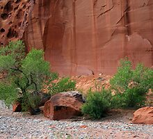 Utah's Red Rock Landscape by CarolM