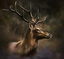 Deer. by andy551