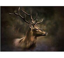 Deer. Photographic Print