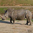 Rhinot buy this?!  by Cody  VanDyke
