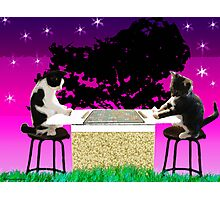 Double Kitty Score Photographic Print