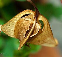 Seed pod by Kathryn Wheeler