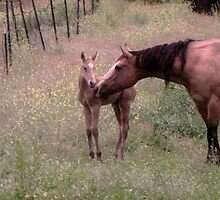 Newest Addition..during night 2010-06-04  Now there's 3, little Buckskin                          by trueblvr
