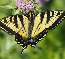 Free As A Butterfly  by DigitallyStill